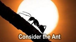 consider_ant