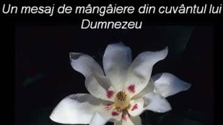 mesaj_mangaiere