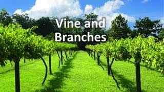 vine_branches